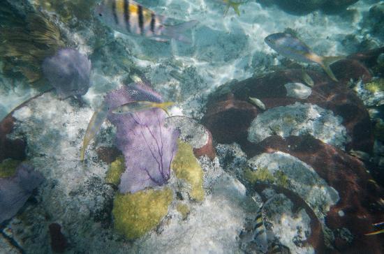 Gran Caribe Club Cayo Guillermo: Iberostar Snorkeling - Coral