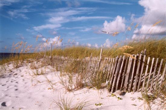 Santa Rosa Island : Beach #3