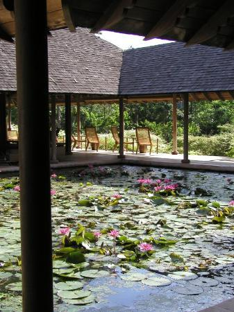 The Datai Langkawi: lily pond