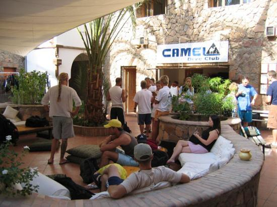 Camel Dive Club & Hotel: cafe area & dive cebtre reception
