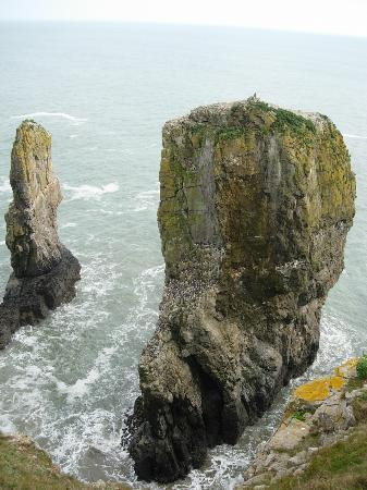 Clement Dale Guest House: Stack Rocks