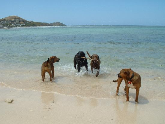 The Palms at Pelican Cove: Puppies