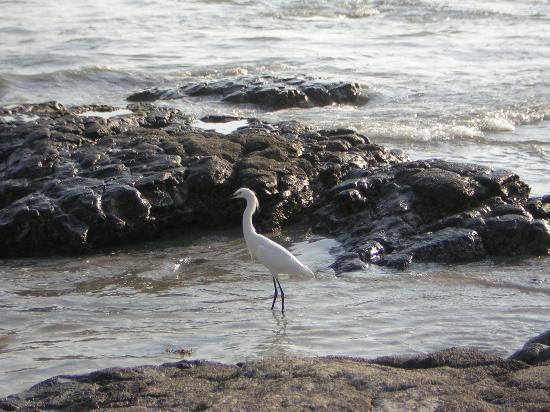 Foto de Punta de Mita