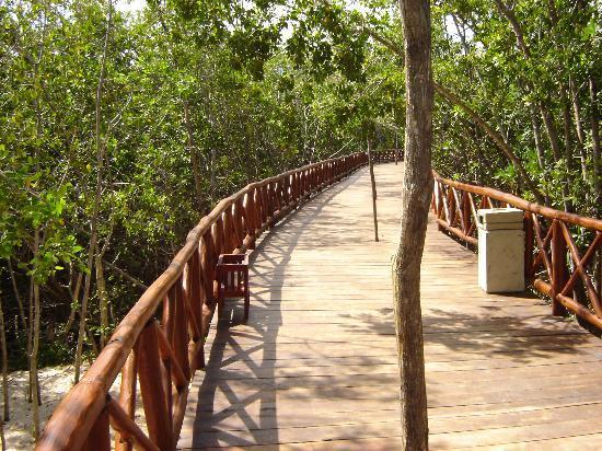 Iberostar Paraiso Maya: walkway to the beach