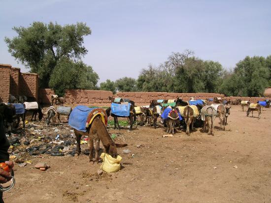 Riad Kniza: Berber Market
