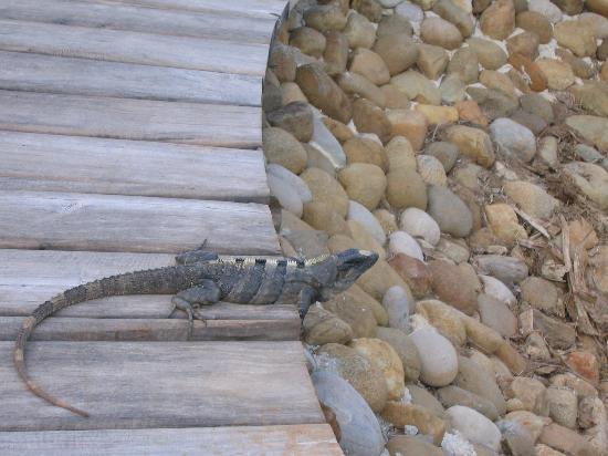 Moon Palace Cancun: Harmless local resident!
