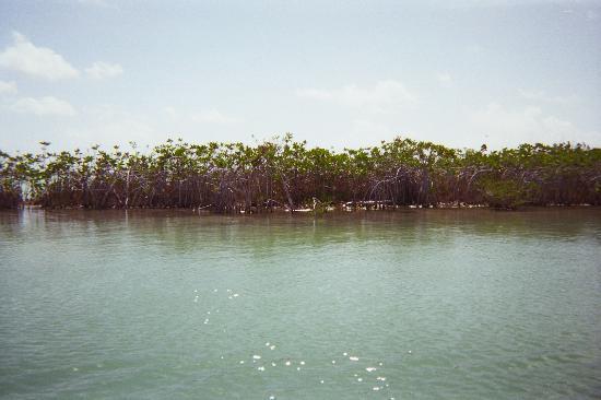 Sian Ka'an, Mexico: mangrove on the sides