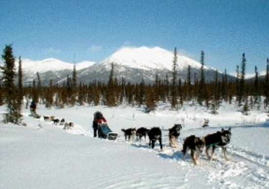 Bettles Lodge: dog sledding