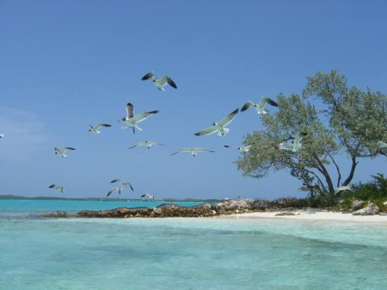 Paradise Point : One of the small Exuma out islands