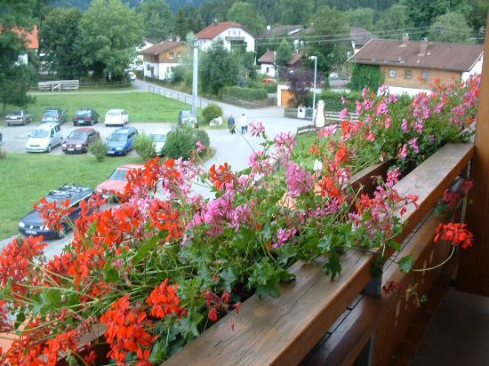 Hotel Helmerhof: Flowers on room balcony
