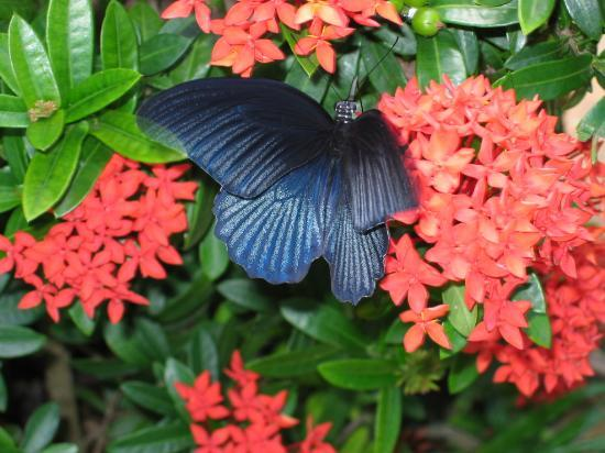 Le Vimarn Cottages & Spa: Blue butterfly at Le Vimarn