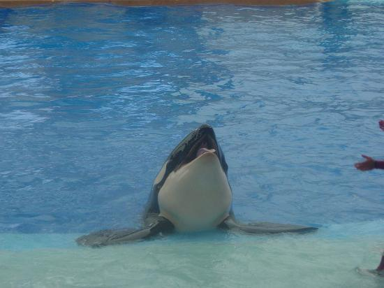 Clearwater Beach Hotel : Drove 84 miles to Orlando to see Shamu!