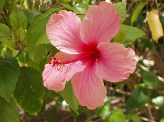 Tokoriki Island Resort : Hibiscus