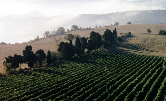Castello di Titignano: View of vineyard