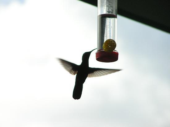 Starlit Escape Villa : Hummingbird on porch at Starlit