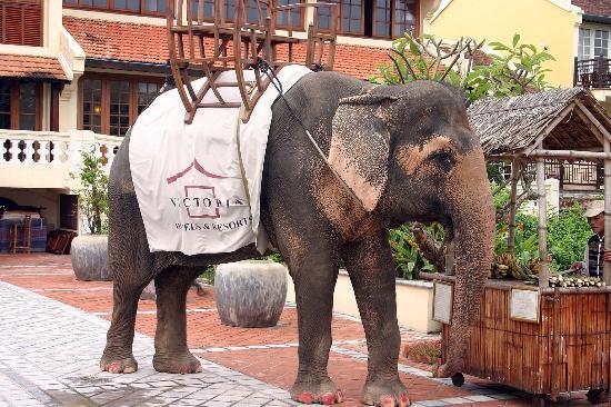 Victoria Hoi An Beach Resort & Spa: Darling - Hotel Elephant
