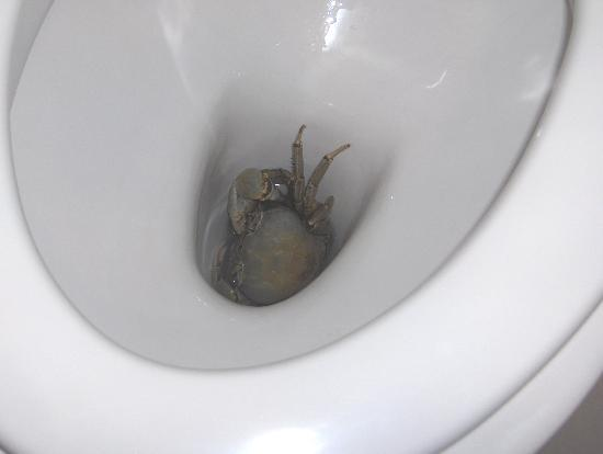Crab in the toilet - Picture of Iberostar Hotel Colonial ...