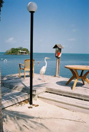 Banana Bay Resort and Marina Marathon: Our long-legged friend at the oceanside