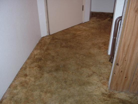 Economy Inn: The brown carpet was so dirty it was black