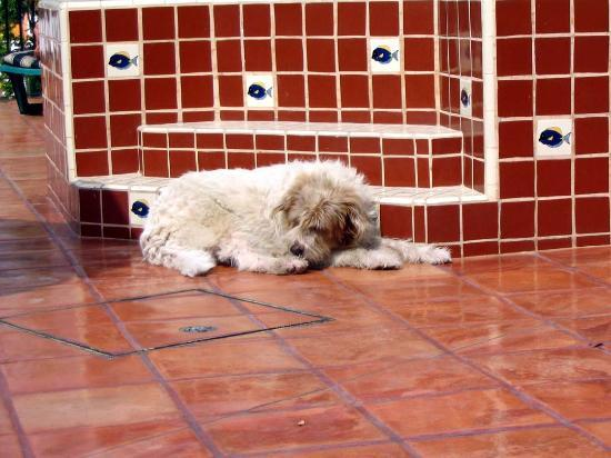 Casa Isabel: Charlie - Full time resident!