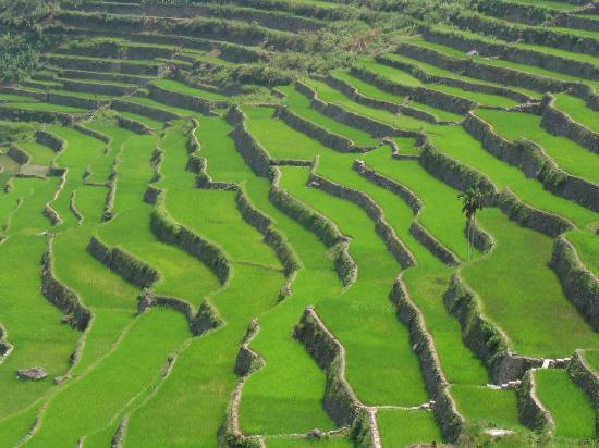 Banaue, Philippines: A close-up look at the rice terraces