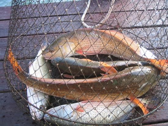 Port Aransas, TX: my catch off my dock