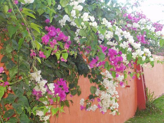 Royal Decameron Complex: flowers on grounds