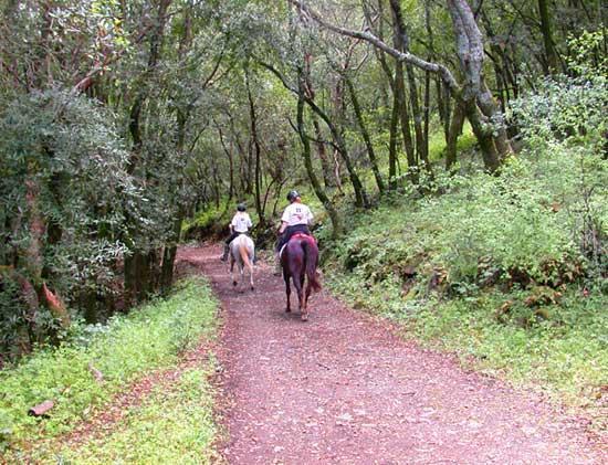Skyline Wilderness Park : Lake Marie Road, entering moist woods.