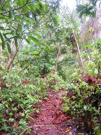 Path to Casa Iguana
