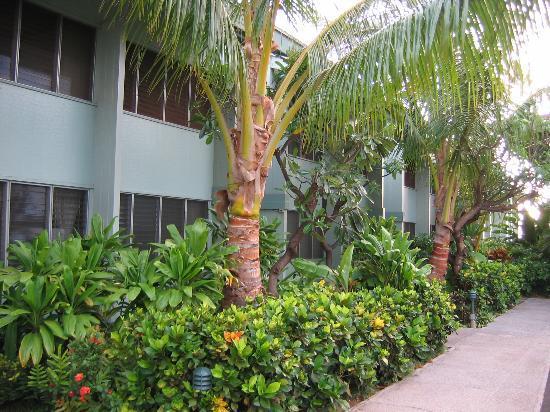 Hale Kai Oceanfront Condominiums: Park-Front Condo Units