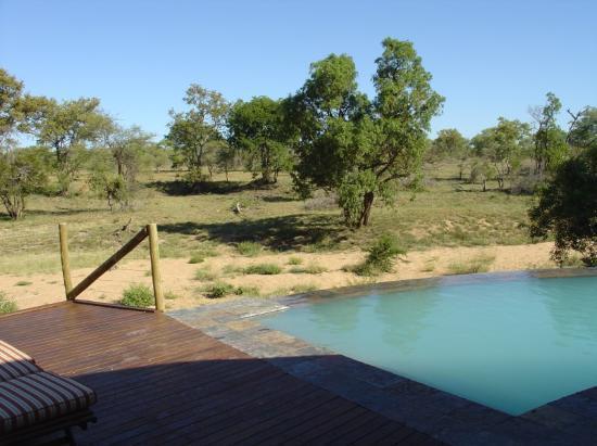 Zuma Zuma Safari Lodge & Spa : Pool
