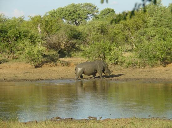 Zuma Zuma Safari Lodge & Spa: Mud, glorious mud
