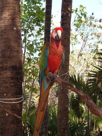 Riviera Maya, México: Scarlet Macaw