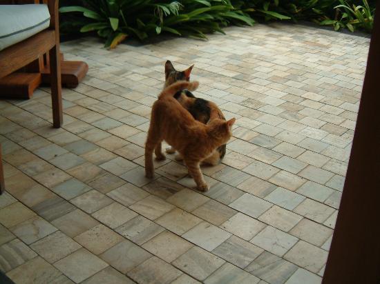 The Oberoi, Mauritius : Oberoi Cats