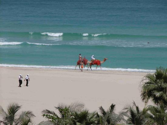 The Ritz-Carlton, Dubai: view of camels from club lounge