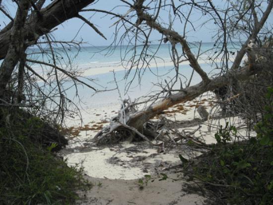 Gold Rock Beach: Beach at Lucayan National Park