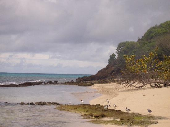 Palm Island Resort & Spa : one of the private beaches