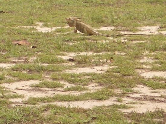 Palm Island Resort & Spa : one of the locals!