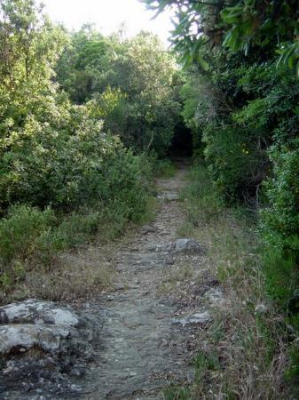 Country House Montali: Hidden hiking trail off upper field