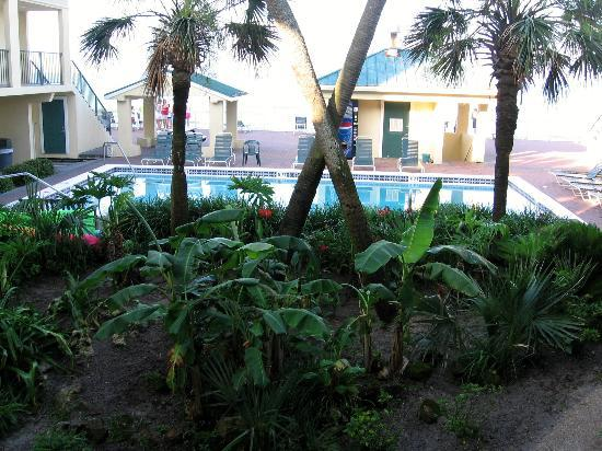 Flamingo Motel: Tropical garden
