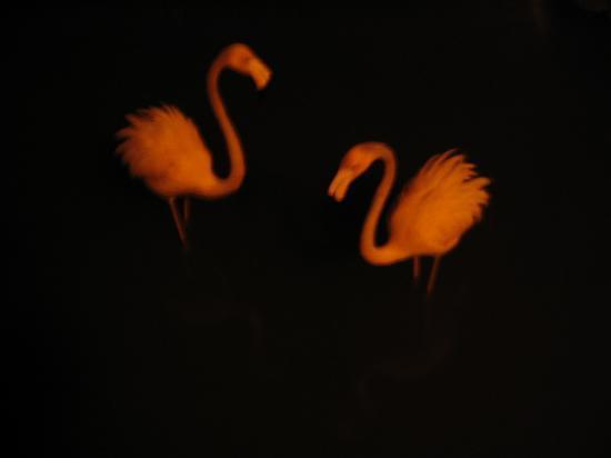 Iberostar Hacienda Dominicus: Flamingos at night in the beautiful waterways.