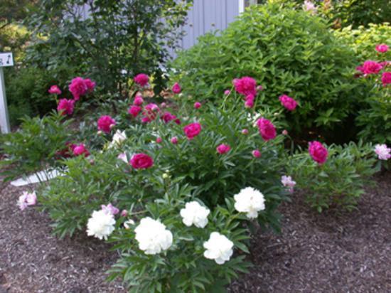 Stone Hill Inn: Summer flowers in bloom
