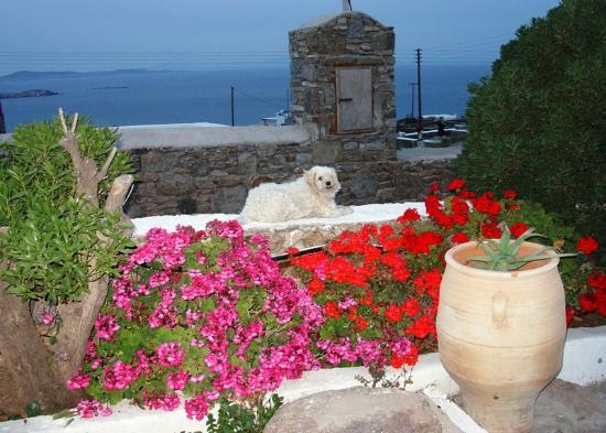 Villa Konstantin: the villa's view and adorable dog