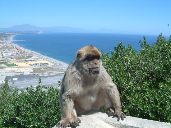 Ona Alanda Club Marbella: Monkey on the Rock!
