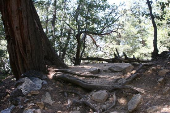 A spot along the Ernie Maxwell trail near Idyllwild