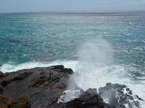 Honolulu, HI: The Marvel of Nature