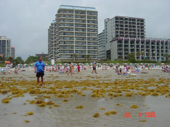 Carolina Wind Hotel Myrtle Beach