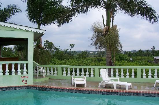 Hidden Paradise Resort Hotel: Pool