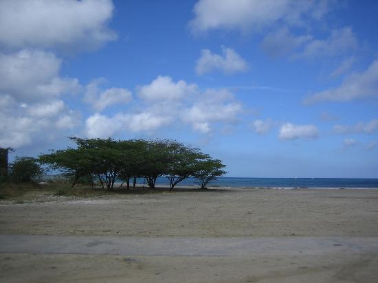 Marriott's Aruba Ocean Club: Divi Tree