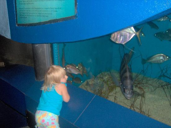 The Seahawk: my daughter at the aqarium,she loved it